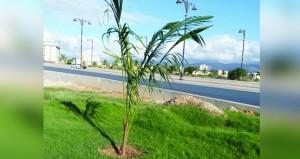 بلدية ظفار تواصل أعمال التجميل والتشجير في الطرق الرئيسية بصلالة