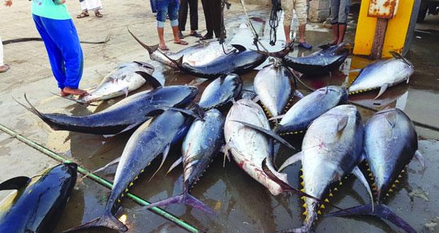 أسواق صور تشهد وفرة كبيرة في أسماك الجيذر