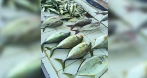 استقرار أسعار الأسماك في الأسواق المحلية للأسبوع الثاني على التوالي