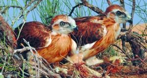 السلطنة تحتفل باليوم العالمي للطيور المهاجرة والتنوع الإحيائي والسلاحف