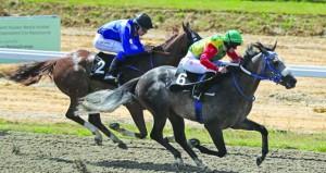 الخيالة السلطانية تواصل تحقيق نتائجها المتقدمة في سباقات الخيل البريطانية