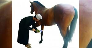 تربية الخيول والعناية بها .. تراث تمتد جذوره لأجيالنا