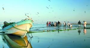 أكثر من 117 مليون ريال عماني قيمة الأسـماك المنزلة بالصيد الحرفي في النصف الأول من العام