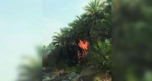 ظاهرة انتشار الحرائق في مزارع الحوقين .. تبحث عن حل?!