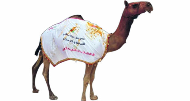 اتحاد سباقات الهجن يواصل استعداداته لانطلاق مهرجان خريف ظفار للمزاينة والمحالبة
