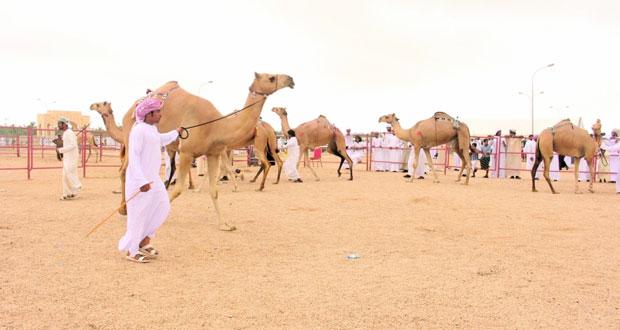 إشادة واسعة بمهرجان ظفار للمزاينة والمحالبة 2018م الذي ينظمه الاتحاد العماني لسباقات الهجن بظفار