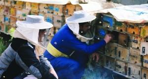 في اليمن .. مربو النحل يخاطرون لإنتاج أجود أنواع العسل