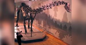 هيكل عظمي كامل لديناصور من نوع ديديودوكس