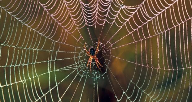 """عنكبوت ينتظر فريسته في شباكه في حقل بمحمية """"ناليبوتسكي"""""""