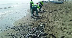 بلدية مسقط : رمي الصيادين للأسماك غير الصالحة للاستهلاك على شواطئ السيب سبب انبعاث الروائح الكريهة