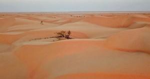 بكثبانها الرملية .. صحراء هيماء مقصد السفاري