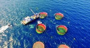 """""""الزراعة والثروة السمكية"""" تتوقع بلوغ إنتاج البلطي 100طن والكوفر 800 طن بنهاية العام الجاري"""