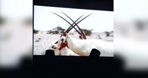 """الجمعية العمانية للسينما تعرض فيلم""""الحياة البرية في عمان"""""""