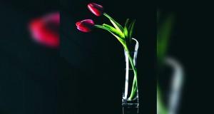 الجمعية العُمانية للتصوير الضوئي تقيم المعرض التاسع للمصورات العُمانيات