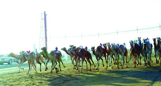 الاتحاد العماني لسباقات الهجن يدشن المحطة الأولى للموسم الحالي لسباقات الهجن بولاية هيماء بعد غد الخميس