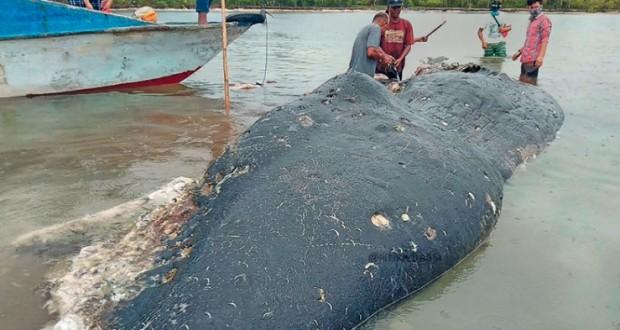 العثور على زجاجات وأكياس من البلاستيك في معدة حوت نافق في إندونيسيا