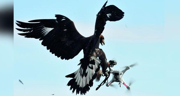 طائرات بدون طيار تسبب فوضي لمسار رحلات طيران في مطار جاتويك البريطاني