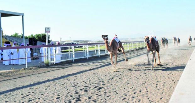 اختتام المهرجان السنوي لسباقات الهجن الأهلية بولاية صحار