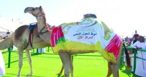 انطلاق منافسات النسخة الخامسة من مهرجان حمراء الدروع لمزاينة الإبل الأصايل