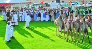 تواصل فعاليات المهرجان السنوي لمزاينة الابل بميدان طوي الشاوي بالمصنعة
