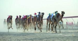 28 شوطاً في انطلاقة المحطة الثانية عشر من سباقات الهجن بمضمار الفليج ببركاء تنظمه الهجانة السلطانية