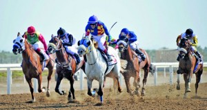 غدا .. مضمار الرحبة يشهد سباق كأس الديربي العماني