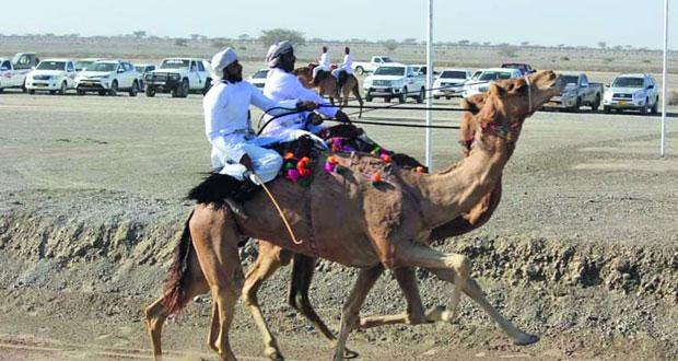 الفرسان على صهوات خيولهم يستعرضون مهارات ركوب الخيل بمهرجان النعيمي التاسع عشر لعرضة الهجن والخيل