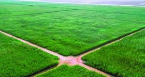 """""""تنمية نفط عمان"""" تدرس توسيع مستنقعات القصب الاصطناعية بحقل نمر"""