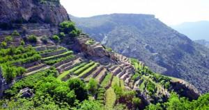 أكثر من 226 ألفا عدد زوار الجبل الأخضر خلال العام الماضي