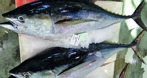 إنزال 30 طنا من الأسماك في يوم واحد بسوق الجملة المركزي