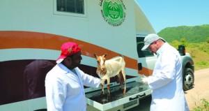 """""""الزراعة والثروة السمكية"""" تؤكد استقرار الوضع الوبائي للأمراض الحيوانية في ظفار"""