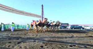 تواصل فعاليات السباق الختامي لكأس جلالة السلطان المعظم لسباقات الهجن للموسم الحالي لليوم الثالث على التوالي
