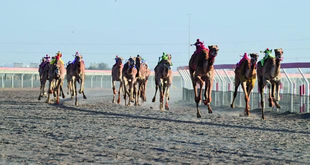 اليوم إسدال الستار على السباق الختامي وتسليم كأس جلالة السلطان المعظم لسباقات الهجن برعاية وزير النقل والاتصالات