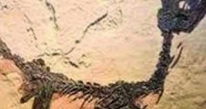 الصين تعثر على آثار ديناصور عمرها 100 مليون سنة