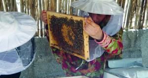 """""""الزراعة والثروة السمكية"""" تنفذ مشروعاً جديداً لإنتاج ملكات نحل العسل والطرود العمانية"""