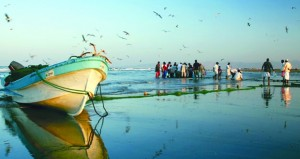 93 ألف طن إجمالي الأسماك المنزلة بالصيد الحرفي خلال شهرين