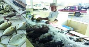 استمرار انخفاض أسعار الأسماك في الأسواق المحلية