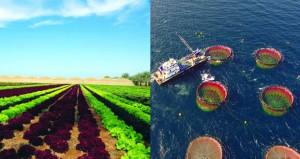 نمو الإنتاج الغذائي 17.2%