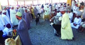 200 ريال عماني أعلى سعر للأغنام بنزوى في هبطة الخامس من ذي الحجة