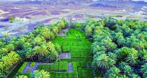 أكثر من 259 ألف فدان إجمالي المساحات المزروعة بالسلطنة بنهاية العام الماضي وبنسبة زيادة 7.9 بالمائة
