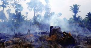 منظمات بيئية تحث إندونيسيا على اتخاذ إجراءات لإخماد حرائق الغابات