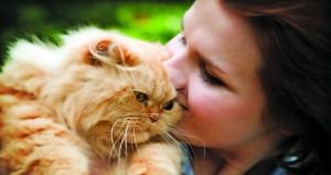 هل لديك حساسية ولكن تريد قطة؟ إليك الحل