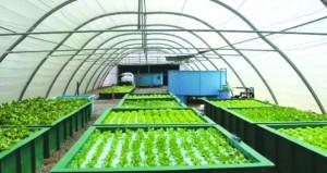 """""""الاستزراع الأحيومائي"""" مشروع تكاملي لتربية الأحياء المائية بالأنظمة المغلقة والزراعة المائية"""
