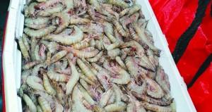 1062 طنًا إنتاج السلطنة من الصيد الحرفي للروبيان العام الماضي