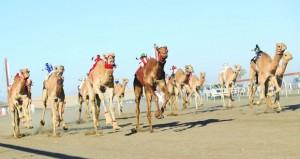 اليوم اتحاد سباقات الهجن يوقع اتفاقية مع (أوكسيدنتال عمان)