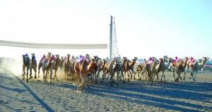 الاتحاد العماني لسباقات الهجن يدشن أول سباقاته في الموسم الجديد بولاية هيماء