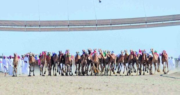 انطلاق المحطة الثالثة للمهرجان السنوي لسباقات الهجن الأهلية بولاية المضيبي