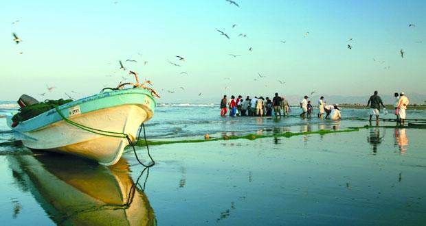 229 الف طن إجمالي كمية الأسماك المنزلة بالصيد الحرفي