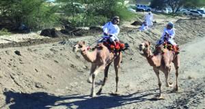 سباق لركض عرضة الهجن بقرية الشعيبة بالمصنعة