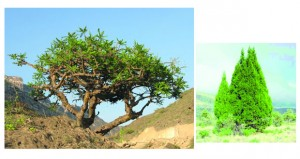 أكثر من 13 ألف نوع تشكل واقع النباتات البرية في عُمان
